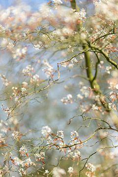 Blühender Baum von André Scherpenberg