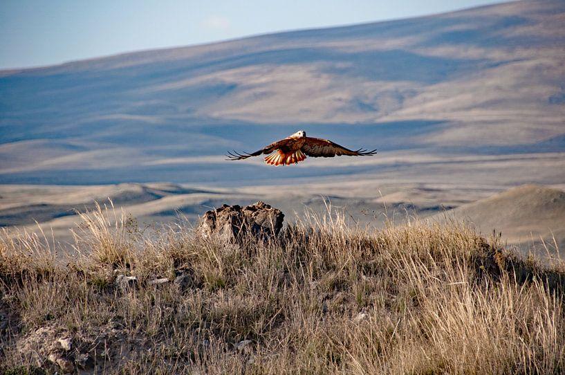 Opvliegende roofvogel bij Zorats Karer in Armenië van Anne Hana