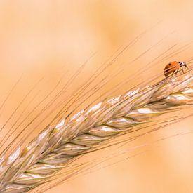 Ladybug van Marga Vroom