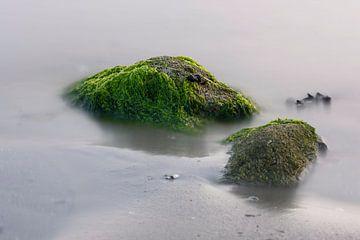 Zeewier groen 1 von Albert Wester Terschelling Photography