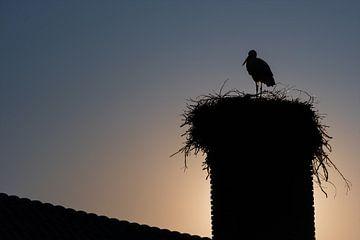 Ooievaar met nest in een schoorsteen van Miranda Heemskerk