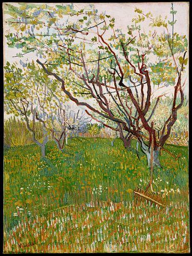 Blühender Obstgarten - Vincent van Gogh von Hollandse Meesters