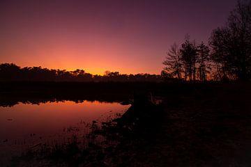 Sonnenuntergang zur goldenen Stunde im Wald von Marco Leeggangers