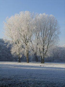 Winterrijp van Maarten van Dam