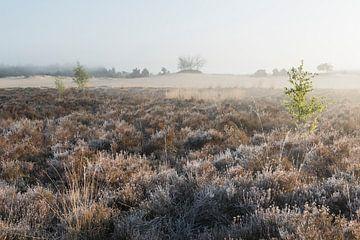 Morgen – Nationalpark De Loonse en Drunense Duinen von Laura Vink
