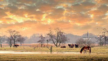 Exmoor-Ponys auf der Wiese 17. von Marcel Kieffer