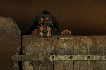 Lieve hond kijkt over de rand en wil graag naar buiten van Caroline van der Vecht