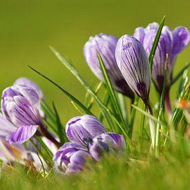 Spring is coming! von Georges Hoeberechts