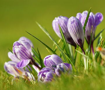 De lente komt! van Georges Hoeberechts
