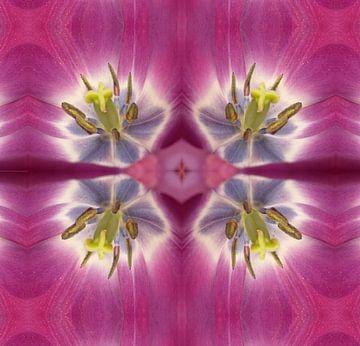 bloem 46 van Margriet Snaterse