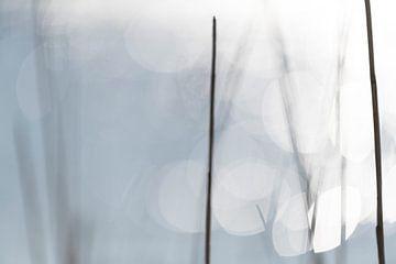 glinstering van het meer van Petra Slingenberg