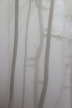 Bäume im Nebel von Nina Strategier