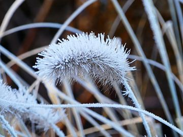 Bevroren pluim van Petra Dielman