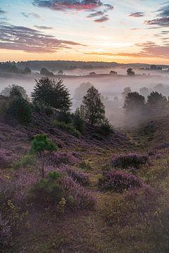 Eine neblig violette Posbank von Albert Lamme