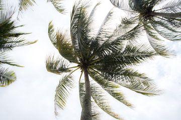 Zwierig zwaaiende palmen van Annelies Martinot