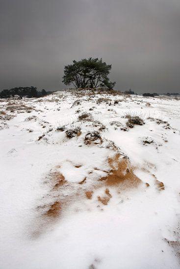Sneeuw en Zand III