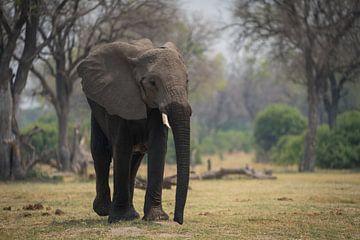 olifant van Ed Dorrestein