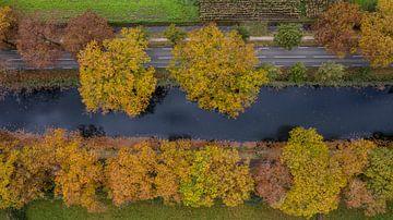 Kanaal luchtfoto met Amerikaanse eiken van Kelvin Middelink