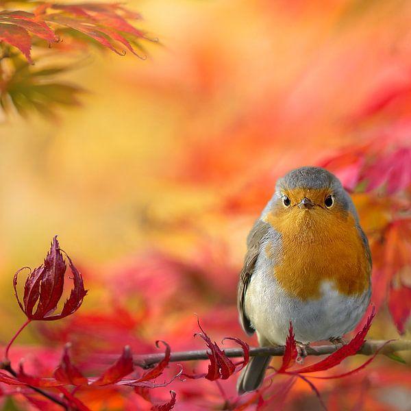 Herfstkleuren met roodborst van Teuni's Dreams of Reality