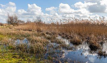 Riet landschap... van Bert - Photostreamkatwijk