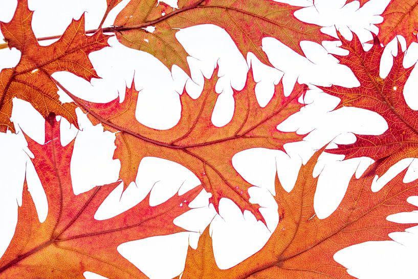 Fallende Blätter von Christl Deckx