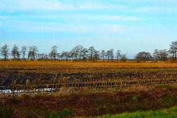 Blick auf Kornfeld, Herbst, nach der Ernte, Doezum, Groningen von Mark van der Werf