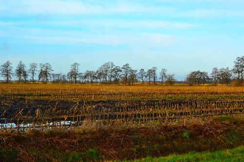 ZIcht op Maisveld, najaar, na oogst, Doezum, Groningen