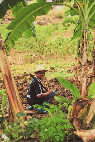 Thaise boer van