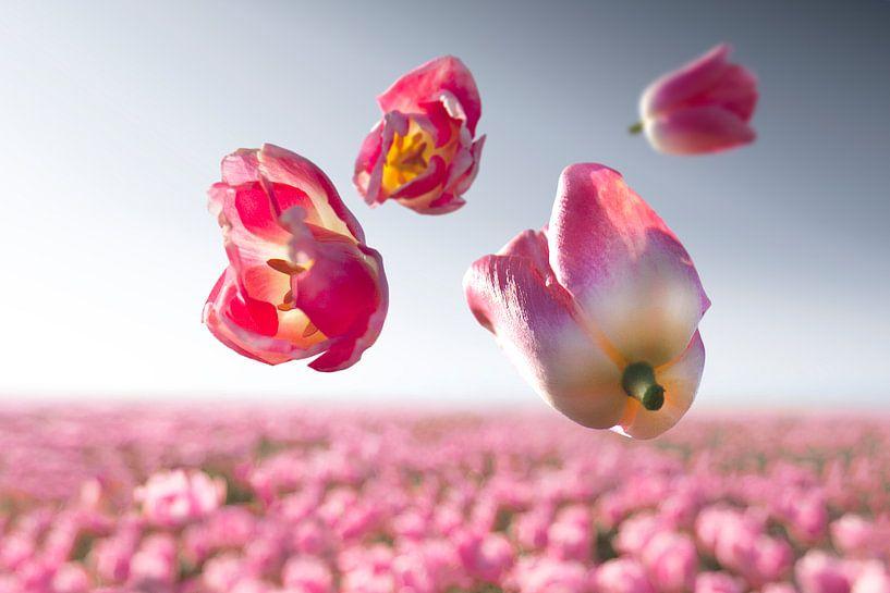 Blumenkraft - Dynasty von Claire Droppert