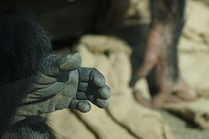 Geef me je hand.
