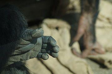 Geef me je hand. van Eisenpictures