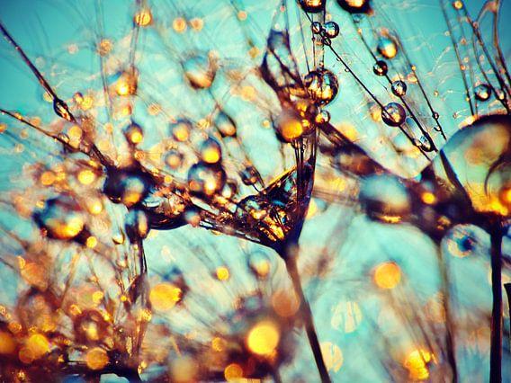 Pusteblumen-Cocktail van Julia Delgado