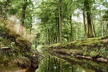 Rijsterbos in Friesland van Jelte Bosma