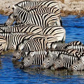Groep ZEBRA's in waterhole van Marianne Ottemann - OTTI