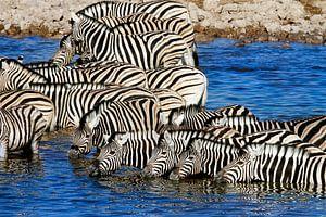 Groep ZEBRA's in waterhole