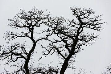 Silhouet van kale eiken in de herfst van Patrick Verhoef