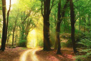 Waldweg von Rigo Meens