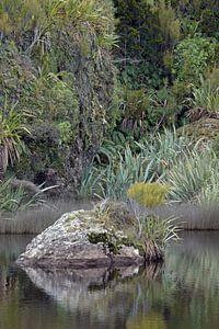 Nieuw-zeelands groene natuur bij Ship Creek