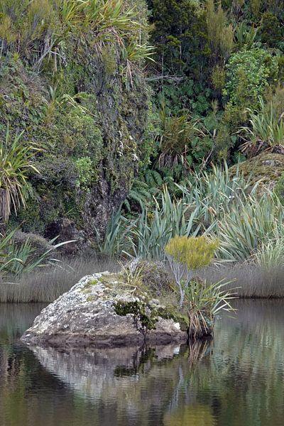 Nieuw-zeelands groene natuur bij Ship Creek van Aagje de Jong