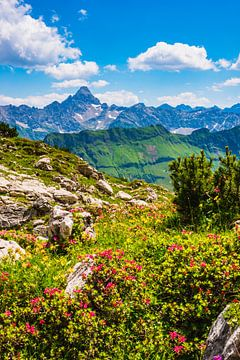 Alpenrozen en de berg Hochvogel van Walter G. Allgöwer