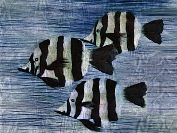 Zebrafische von Christine Nöhmeier