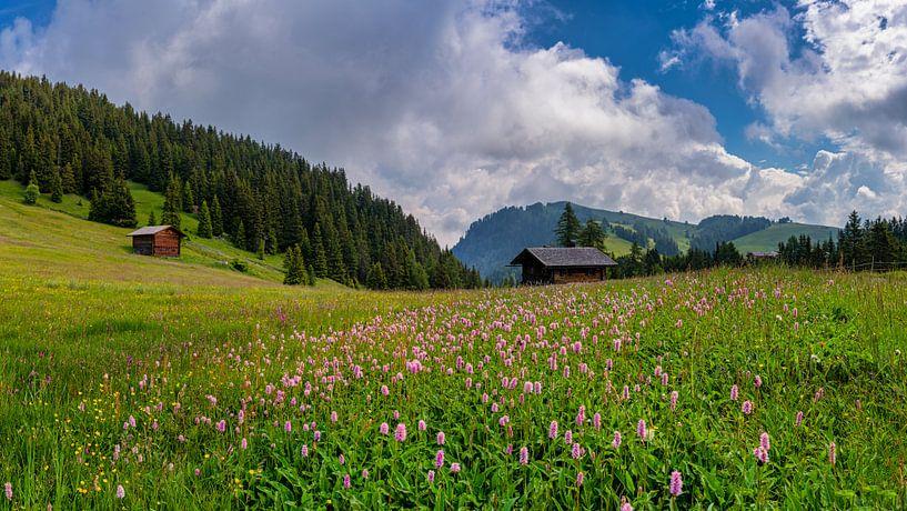 Bloemenweide in Alpe Di Siusi - Seiser Alm - Compatsch - Dolomieten - Italië van Teun Ruijters