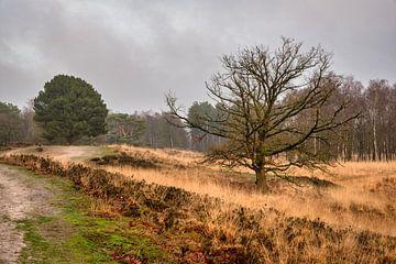 Kortenhoeff-Grenzpark Kalmthoutse Heide von Bruno Hermans