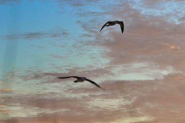 vliegende  birds van Micky Bish
