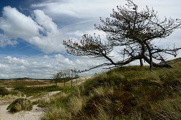 Getekend door weer en wind van Jaap Kloppenburg