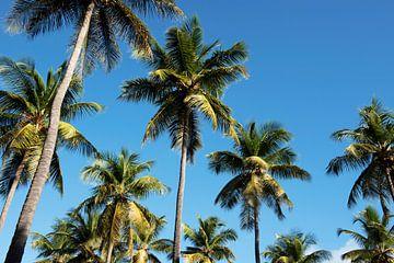 Palmen gegen den blauen Himmel von Margot van den Berg