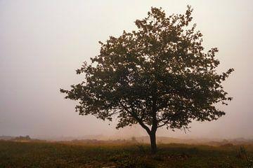 Eenzame eik in de mist op de heide van Sjoerd van der Wal