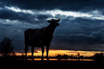 Vache au coucher du soleil sur Els Korsten