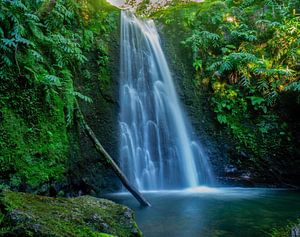 Jungle waterval