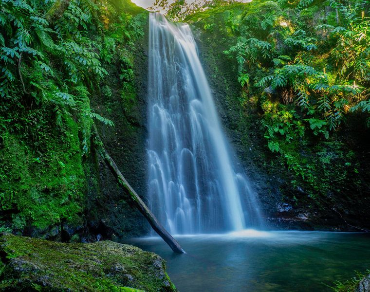 Jungle waterval van Gideon Gerard